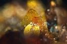 Mineral-L_158